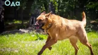 Возьми собаку из приюта в Некрасовке