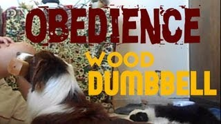 Gin, Border Collie Puppy - Obedience Foundations (wood Dumbbell)