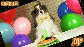 ДЕНЬ РОЖДЕНИЯ собаки / Веселый ЮКИ поет и танцует в КЛИПЕ