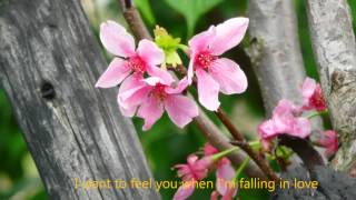 The Carpenters - Touch Me When We Are Dancing + lyrics ,720P HD, 2012 Cherry Blossoms -磺溪櫻花