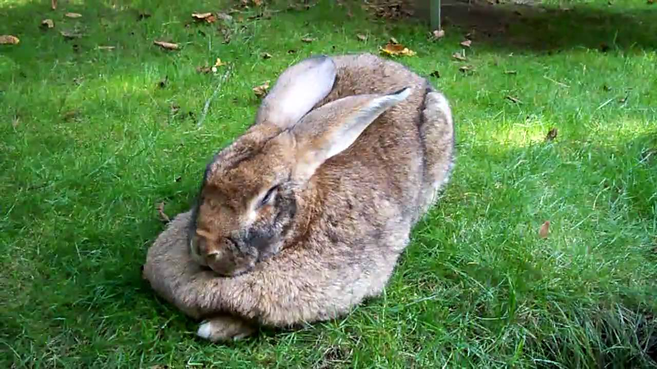 Bunny Big
