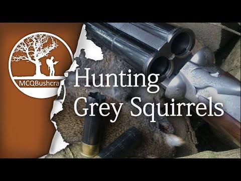 Hunting: Grey Squirrels with a Shotgun
