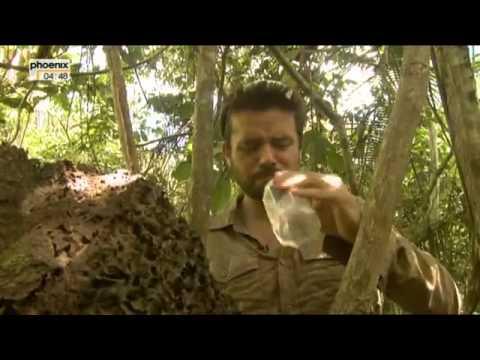 Peru   In der Haut einer Viper Doku