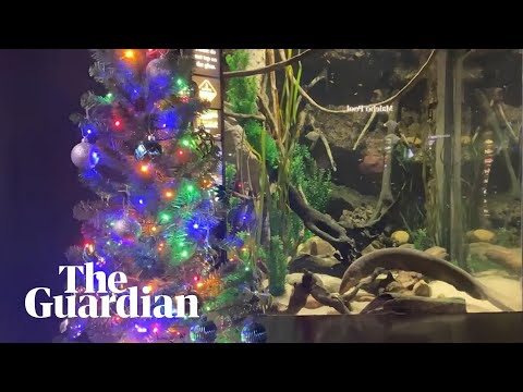 Doug & Scarpetti - Electric eel lights up Christmas tree in Aquarium