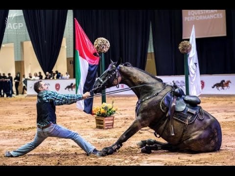 Horse Performance | Dubai International Horse Fair