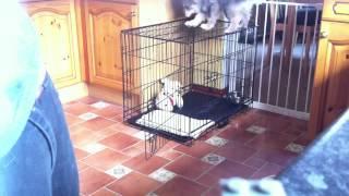 Stupid Dog Jumps On Cage.