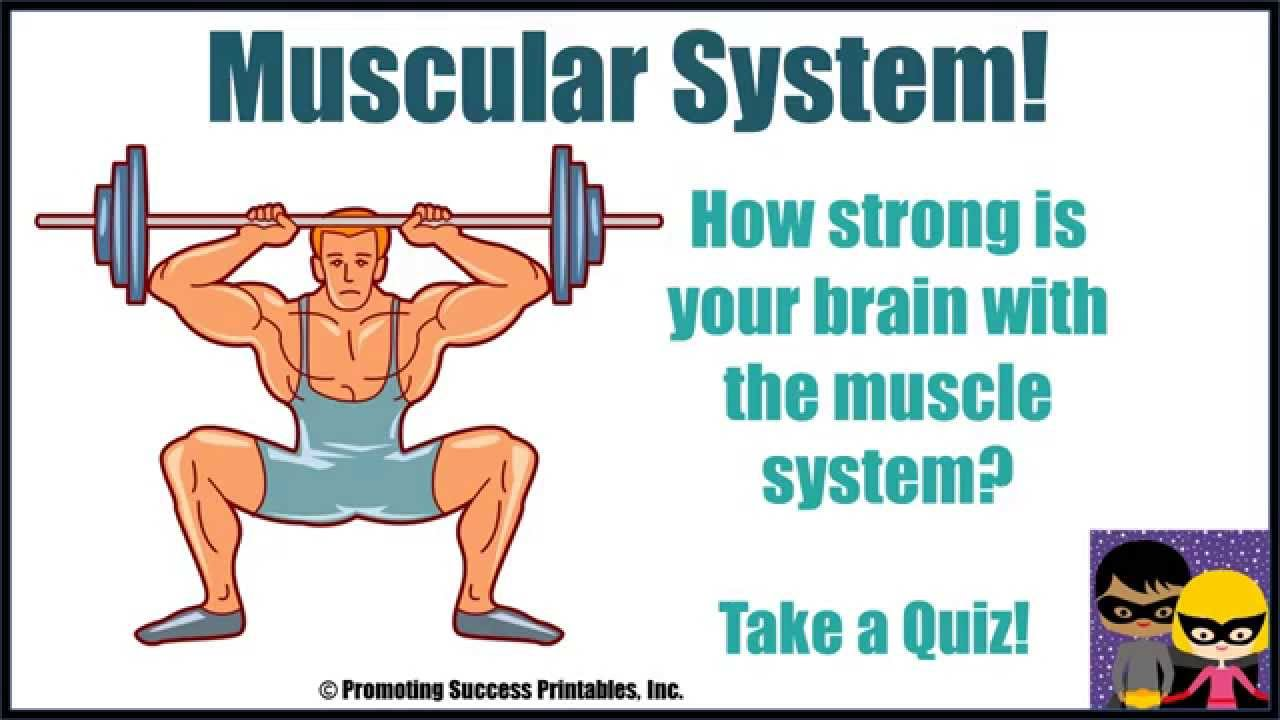 Muscular System Human Body Muscular System Anatomy Science Video For