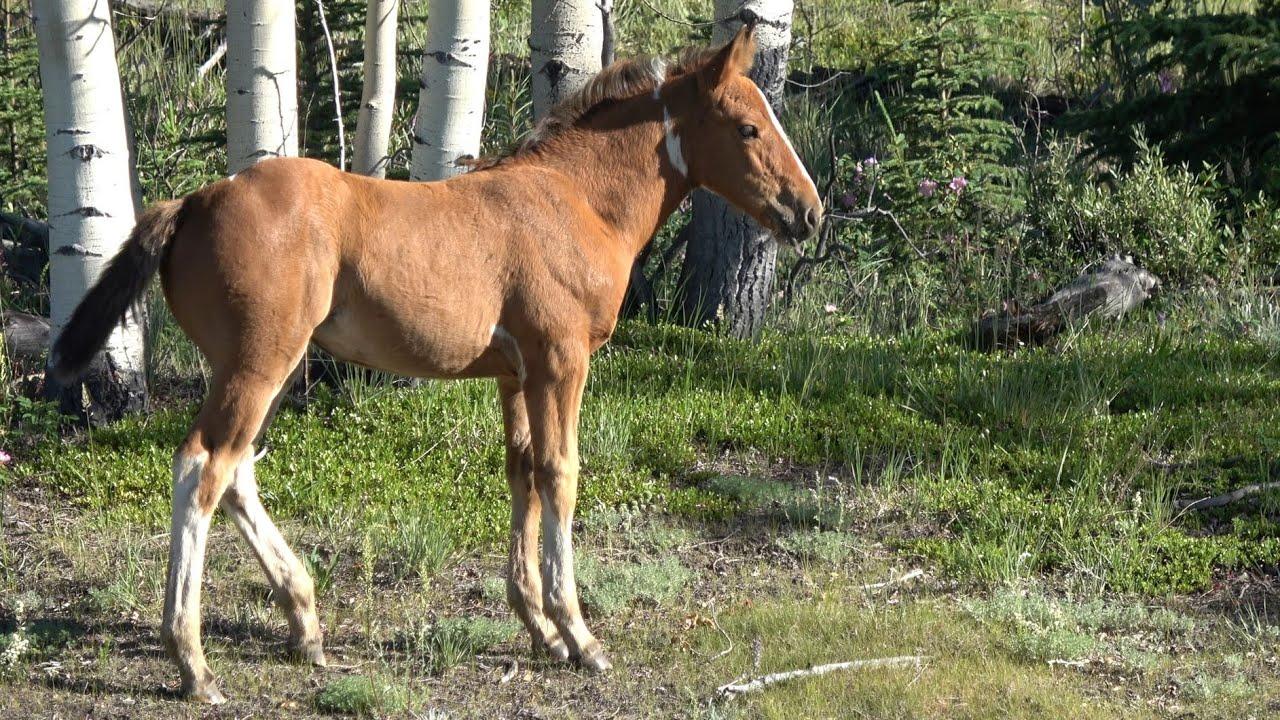My Home, Yukon Wild Horses