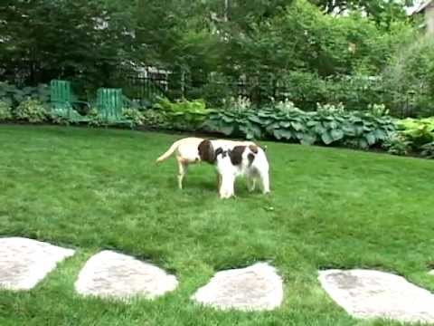 How Dogs communicate: A Visit to a Dog Park