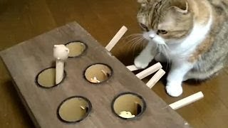 Cat is an expert at this whack-a-mole game