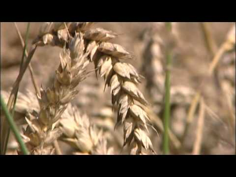 The effects of crops on climate change (University of Reading)