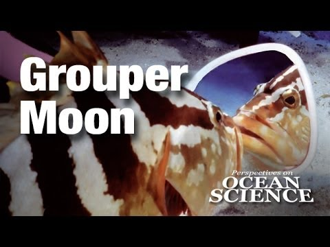 Grouper Moon: Saving One of the Last Great Populations of an Endangered Caribbean Reef Fish