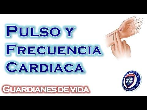 Pulso y Frecuencia Cardiaca - Pulse and Heart Rate : Guardianes De Vida