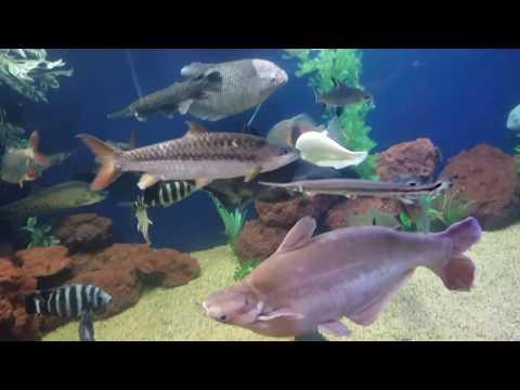 Ohio fish rescue, donating monsters to a public aquarium