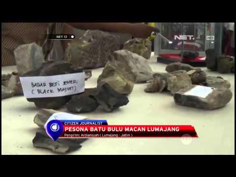 Batu Mulia Bulu Macan Asli Jadi Primadona Dalam Pameran Batu Akik Terbesar Di Lumajang - NET12