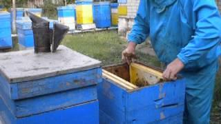 Майский мёд 2013 год(Решил качнуть майского мёда, в последний день мая., 2013-06-05T03:46:20.000Z)