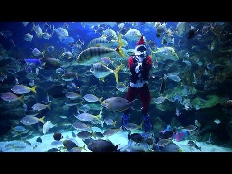 Malaisie: le Père Noël plonge dans l