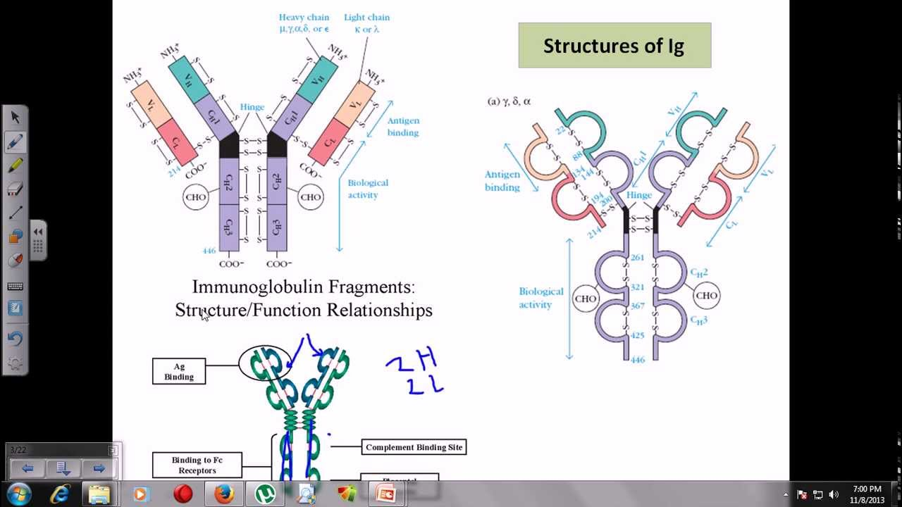 introduction to immunoglobulins structure and research Introduction to cytogenetics this lecture is an introduction to the science of cytogenetics cytogenetics is the study of chromosomes, genomic structure, function and variation, and the role of these aspects in human disease and heredity.