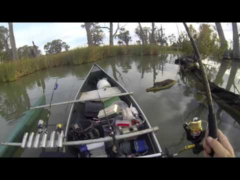Callop Fishing On The Murray River
