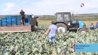 Социальный репортаж: В Белгородской области агроном создала с нуля успешное фермерское хозяйство(Как Нина Пахомова стала одним из самых успешных фермеров в области, почему многие ее коллеги, напротив,..., 2013-09-11T12:04:22.000Z)