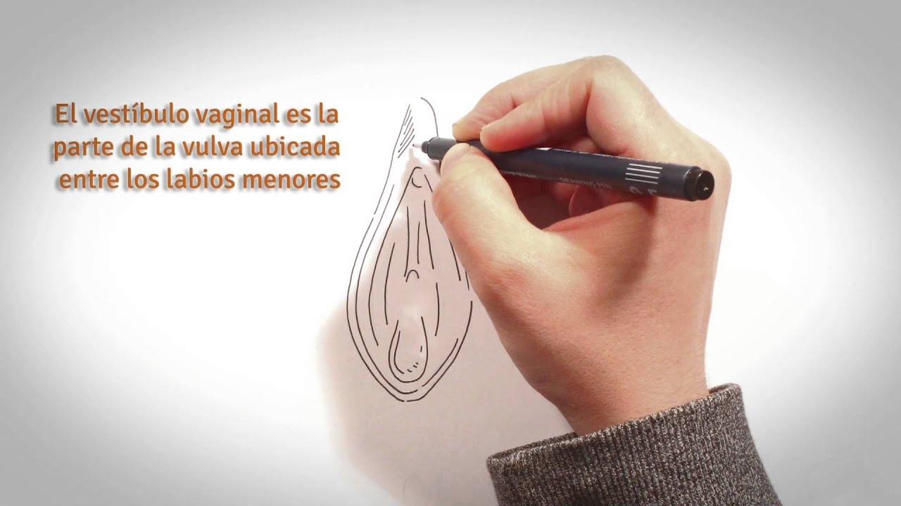 ChauTabú - Órganos sexuales femeninos - YouTube