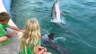 Trent Hazen and Lauren Banks playing with the dolphins in Costa May...