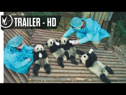 Pandas Official Trailer #1 (2018) -- Regal Cinemas [HD] Mp3
