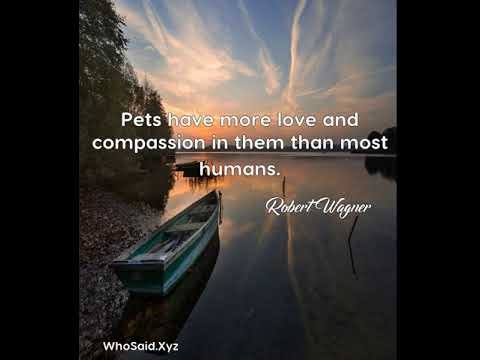 Robert Wagner: Pets have more love and compassion in them than most humans....