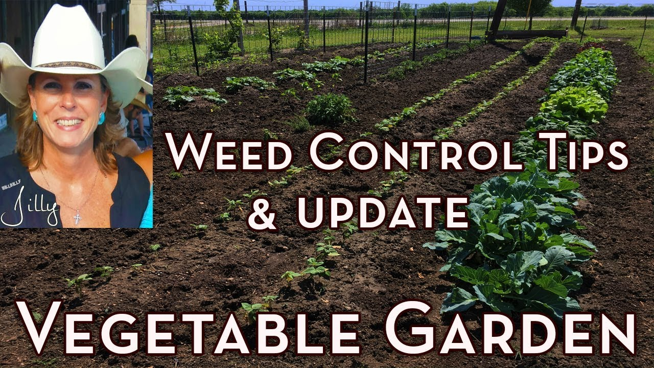 Vegetable garden weed control tips and garden update how - Weed killer safe for vegetable garden ...
