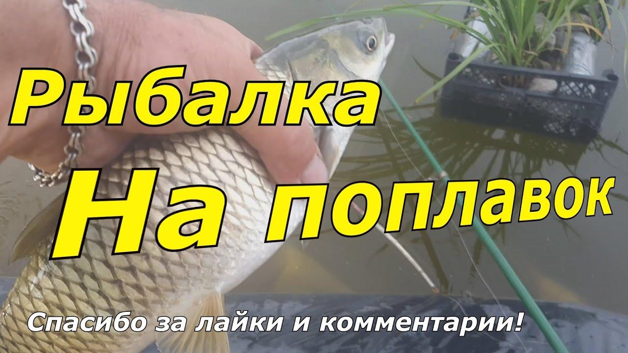 👍💯👉 Рыбалка на поплавок Карп Белый Амур Искусственный пруд в своём огороде