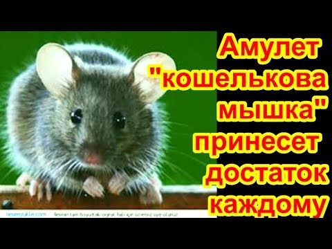 кошельковая мышь   к достатку в доме !  как избавиться от мышей