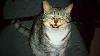 Funny Cats 🐱😅 Funny Cats Sneezing Crazy (Full) [Funny Pets]