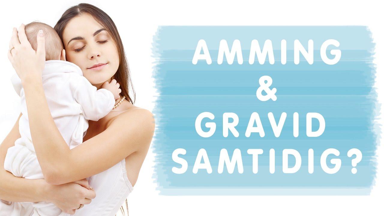 amming gravid