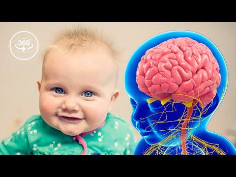 How Your Brain Develops