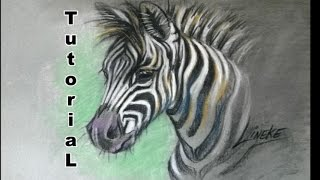 How to draw a Zebra foal / animal drawings / #38