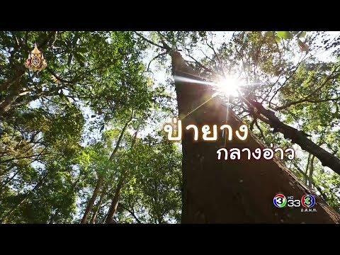ป่ายางกลางอ่าว - วันที่ 06 Apr 2019