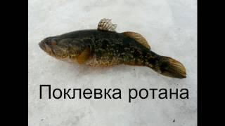 Зимняя рыбалка на мормышку на реке Клязьма во Владимирской области