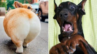 Funny Animal Videos That Are IMPOSSIBLE Not To Laugh At  (CUTE)