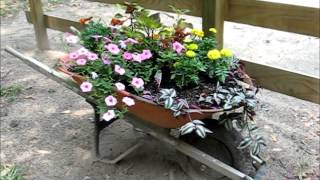 Wheelbarrow Planter, May 23, 2013