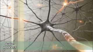 Intelligenz - Der Blick ins Gehirn (Psychologie und Hirnforschung)