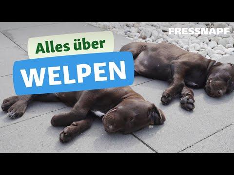 Alles über Welpen - Tipps & Infos zu jungen Hunden