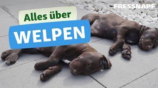 Alles über Welpen  Tipps & Infos zu jungen Hunden