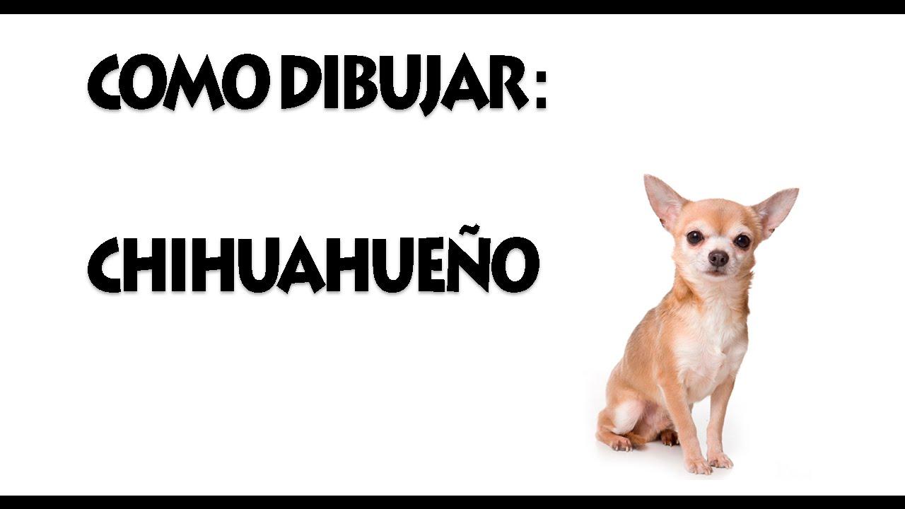 Dibujo De Chihuahua: Tutoria De Dibujo: Chihuahua