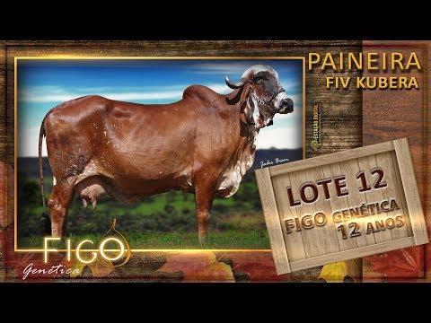 LOTE 12 - PAINEIRA FIV KUBERA - ACFG 2344
