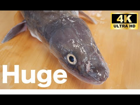 《4k》【Huge eel fish !!】How to clean and prepare a huge eel fish. Japanese Traditional Food.