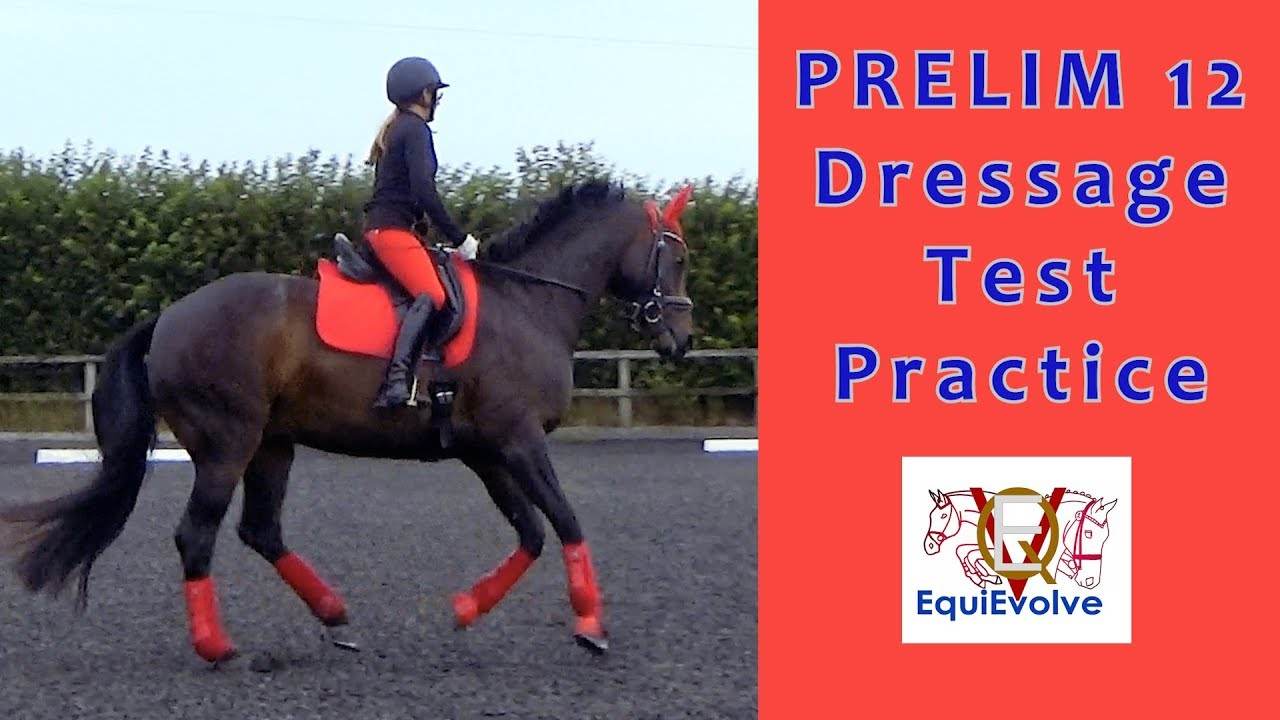 prelim 12 dressage test learning tool youtube