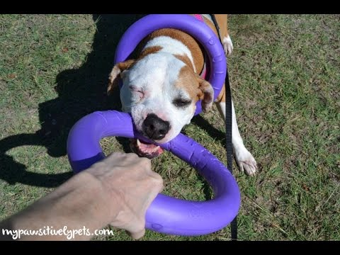 Puller - Interactive Play and Exercise for Your Dog