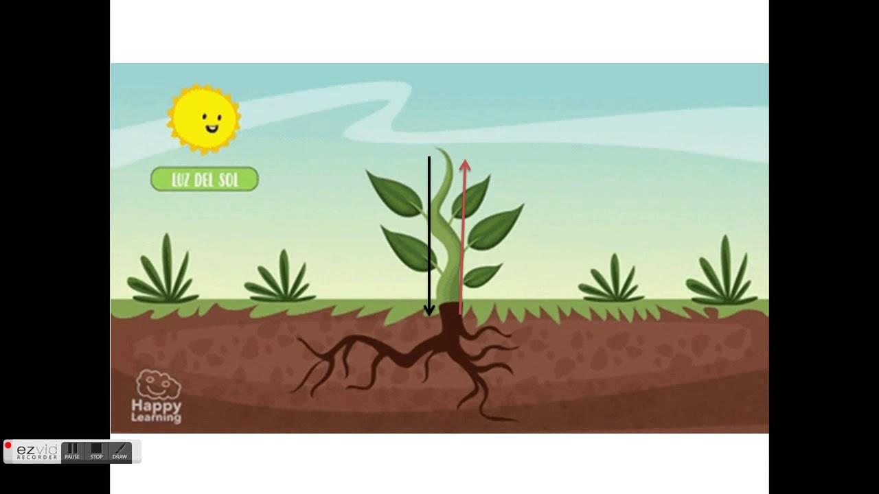 2 BGU Biología Excreción de las plantas - YouTube