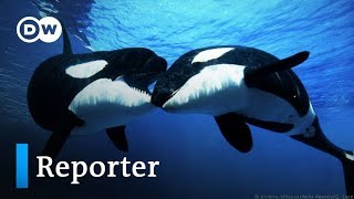 Befreit die Wale!   DW Reporter