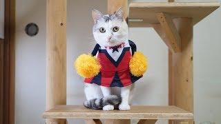 頑張れ日本!猫のチアリーダー